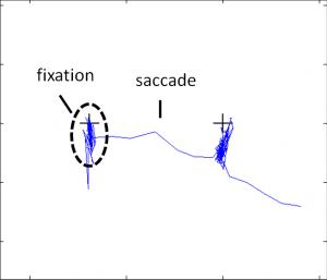 Saccade/Fixation example signal